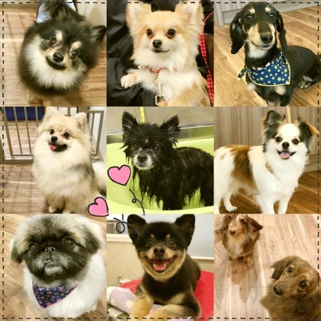 グルーミング犬種(シャンプーコース)
