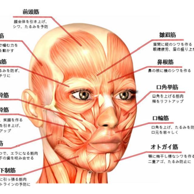 お顔の筋トレ顔筋メソッド~シングル~《75分前後》初10%🈹