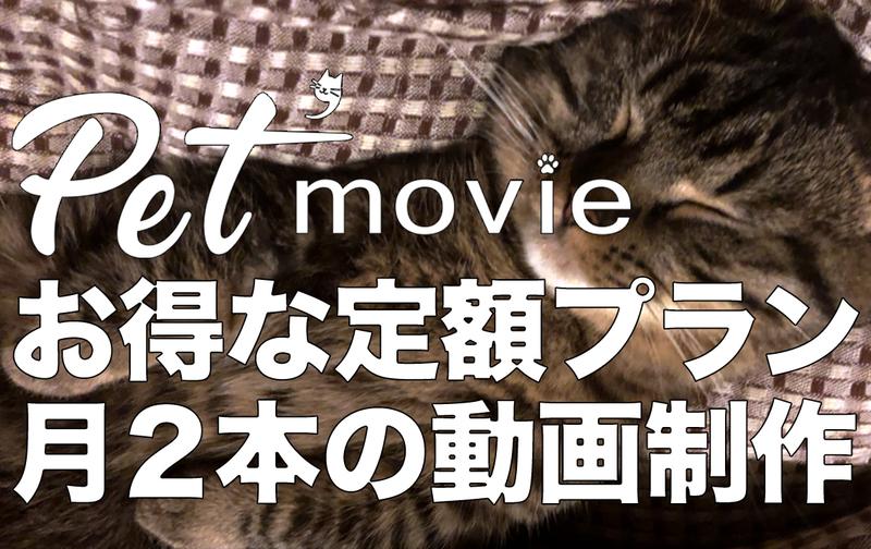 【定額プラン】お得!! Pet'movie