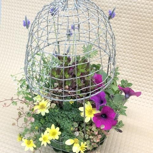 【6月】『吊り下げ出来る!鳥かごの寄せ植え』講師:村上 孝子