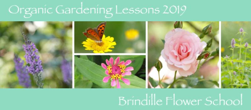 オーガニックガーデン講座 2019*薔薇と季節の草花・ハーブの育て方