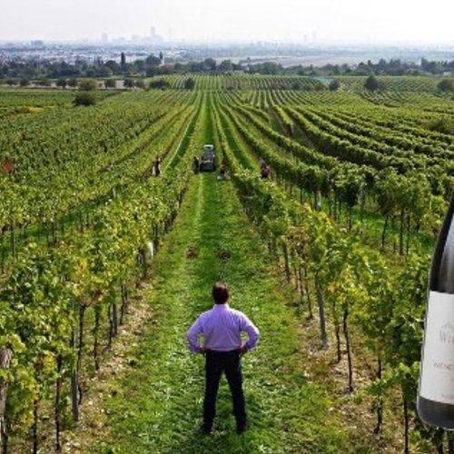 11月11日(土)オーストリアのホイリゲ(辛口新酒)をメインに楽しむワイン飲み会