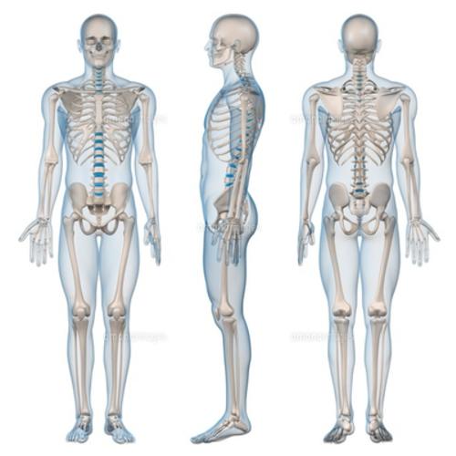 5月ヘルスケアアカデミー がんサバイバーのための動く体づくり講座《胴体/呼吸の解剖学》5月27日(日)10:00〜