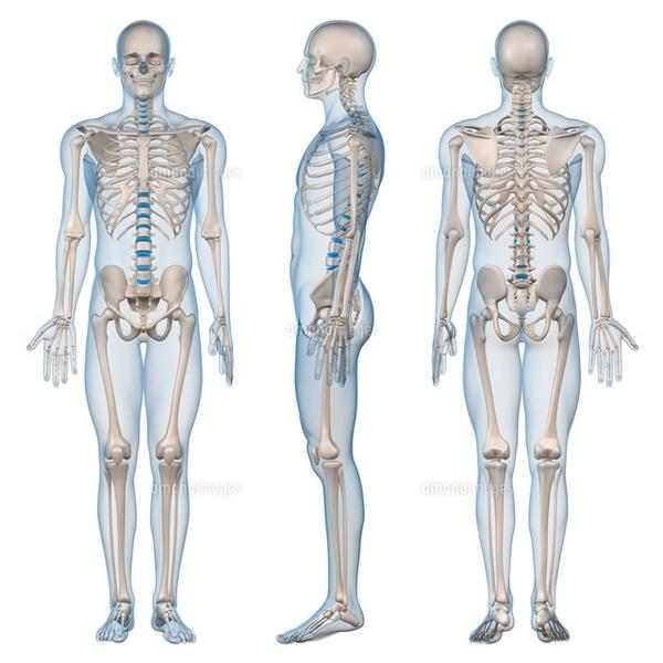 -終了-がんサバイバーのための動くからだづくり講座《解剖学概論・姿勢の解剖学》4/14 10:00〜13:20