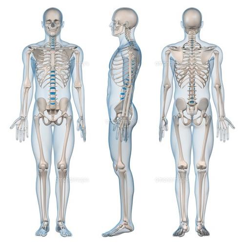 がんサバイバーのための動くからだづくり講座《解剖学概論・姿勢の解剖学》4/14 10:00〜13:20