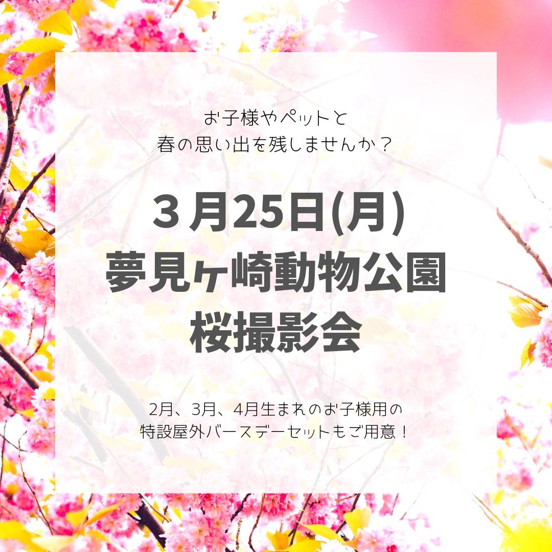 【3月25日】屋外桜撮影会【夢見ヶ崎動物公園】