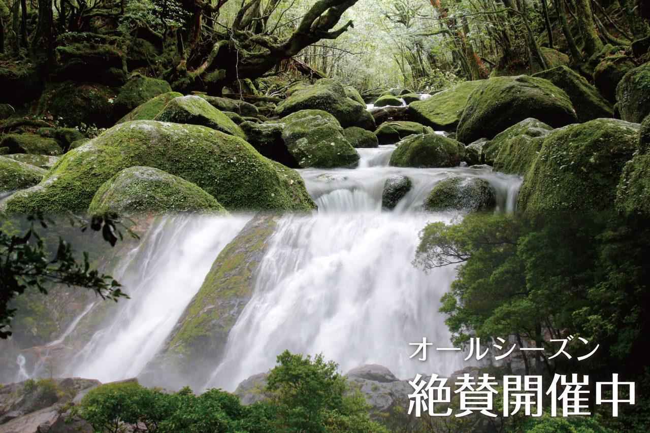 屋久島1日満喫メニュー 白谷雲水峡トレッキング&滝巡りツアー