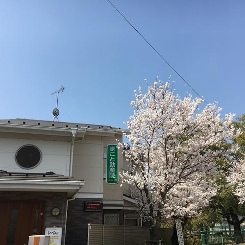 まこと助産院マタニティーヨガ