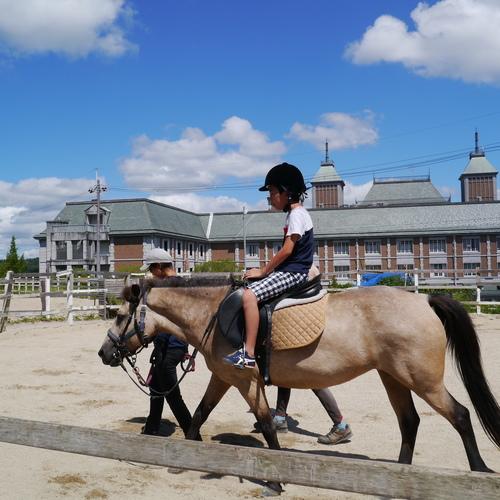 神戸【体験プログラム】ひきうま乗馬