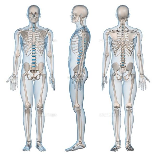 4月ヘルスケアアカデミー がんサバイバーのための動く体づくり講座《解剖学概論》4月15日(日)11:30〜