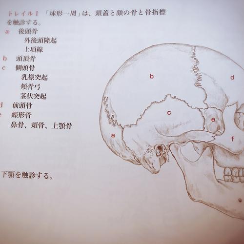 頭蓋骨をゆるめる手技を学ぶ WS