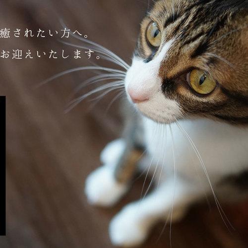にゃんぐりらWEBご予約ページ