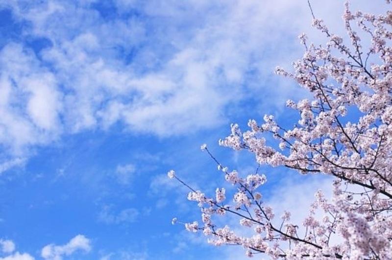 [残1]春の文京区古民家WS