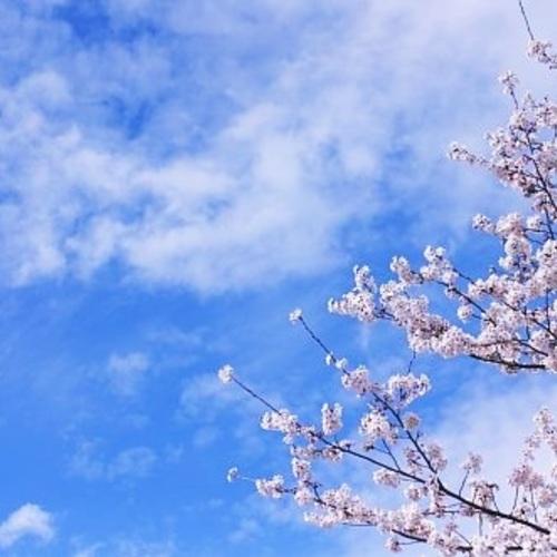[残2]春の文京区古民家WS