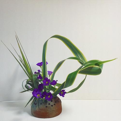 おとな:生け花