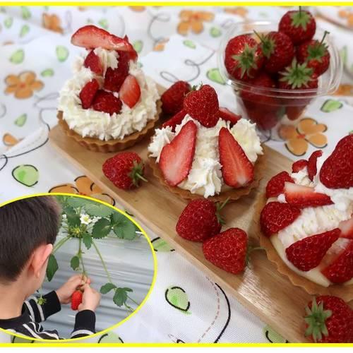 【GW企画】いちごを収穫してミニタルトで食べよう