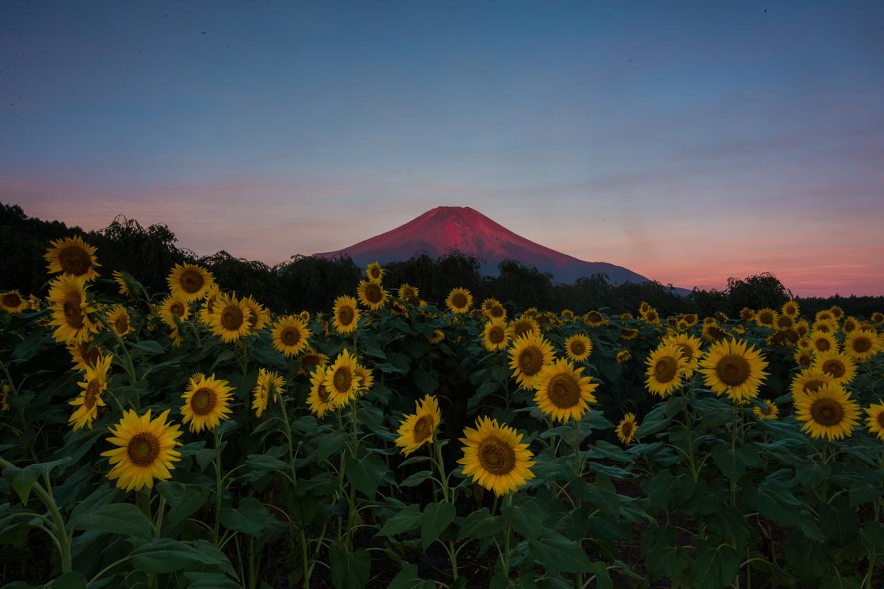 9月23日(日) 山中湖で赤富士&花畑を撮るワークショップ