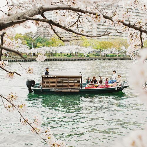 かもめ桜 SAKURA
