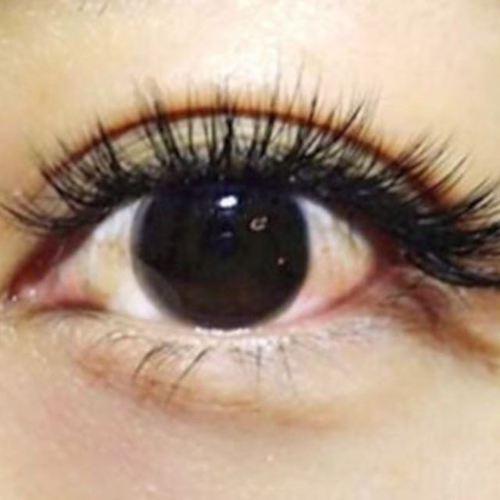 kalon-iris- (Karon'irisu)