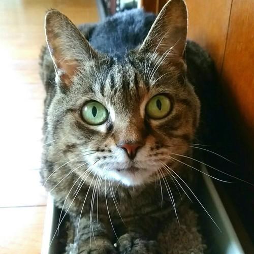 ゆっくり全館見て回って猫たちとふれあっていただきます(特別室を除く) (90 分)