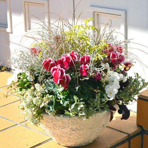 お好きなお花を選べる フリースタイルレッスン