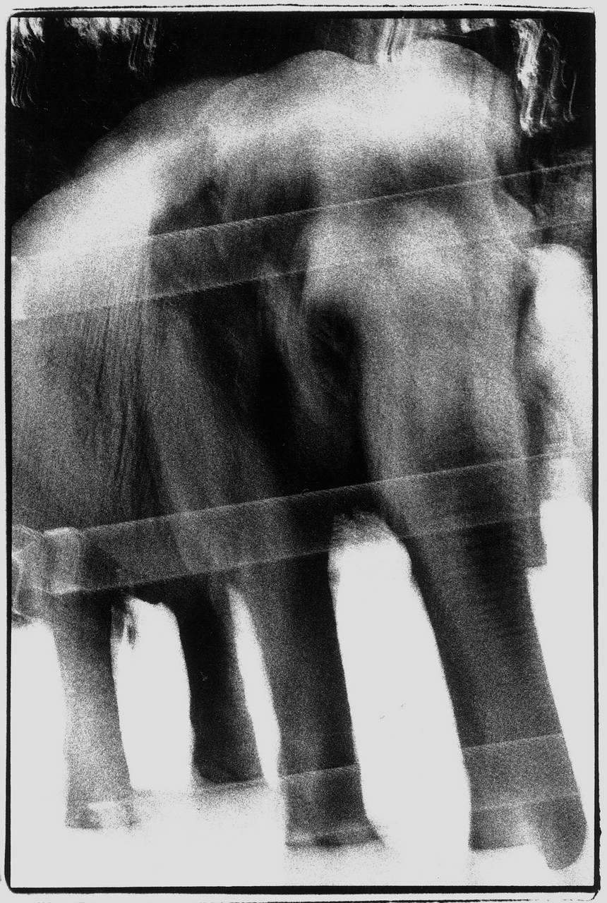表現実践ワークショップ「育緒とディープに撮る上野動物園-フィルムコース」