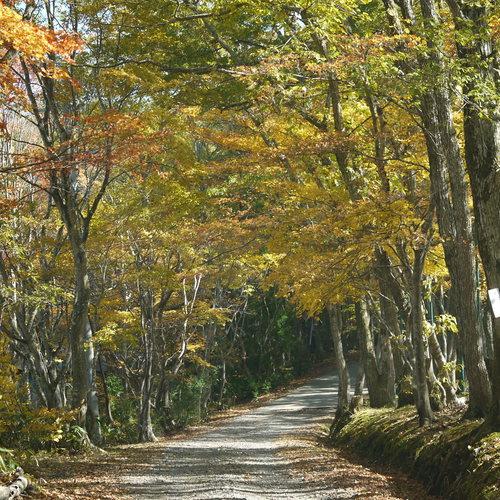 秋のウォーキング
