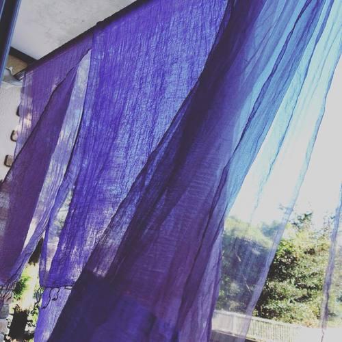 【草木染】高貴なムラサキ・紫根染め