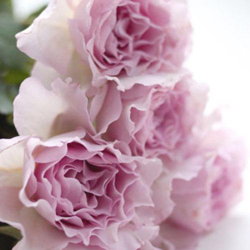 12月Flower Lesson