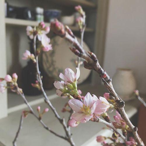 Botanical silk labo オープン記念ワークショップ開催