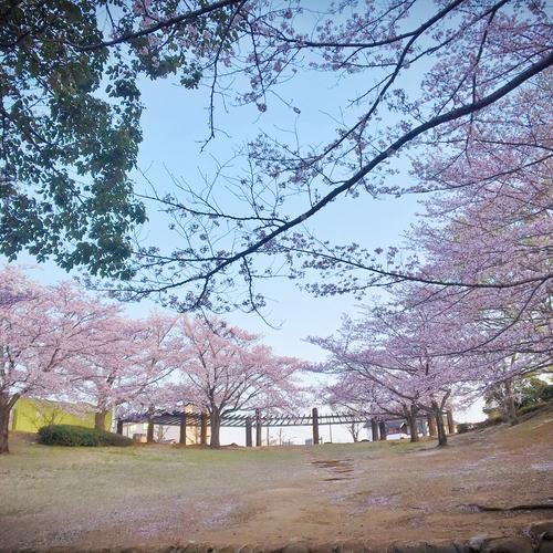 【5/6開催】昭和の森でチャリティヨガ!