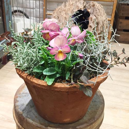 【11月】春まで咲く!ビオラのナチュラル寄せ植え
