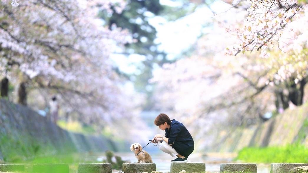 愛犬と家族の撮影会 夙川さくら色