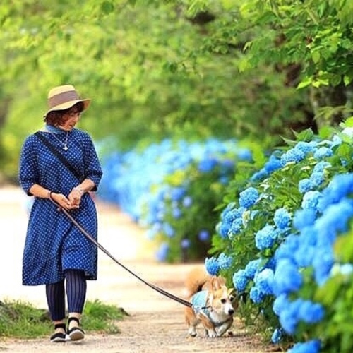 愛犬撮影会 夙川の新緑と紫陽花2018
