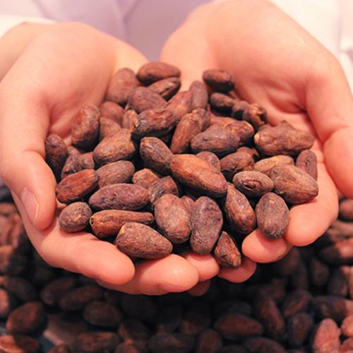 【cacao lab.】親子コース(※保護者1名、お子様1名)