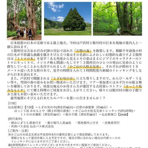 幻想の森・トトロの木・かご山の大桂五兄弟ととざわ旬の市 5月26日
