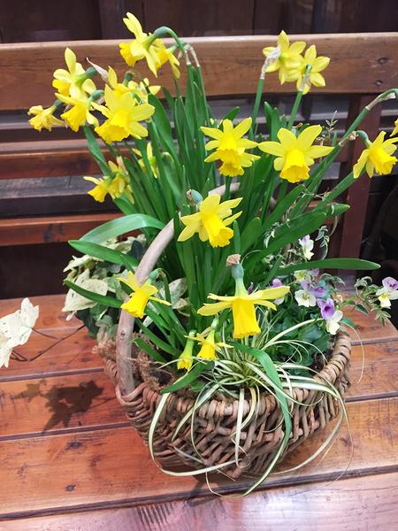 【3月】カゴを使った春の寄せ植え