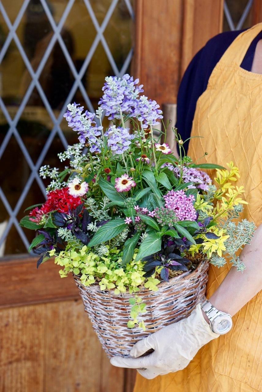 【大阪八尾教室 / かごギャザリング体験】~花束みたいな新しい寄せ植え~プランツ・ギャザリングコース