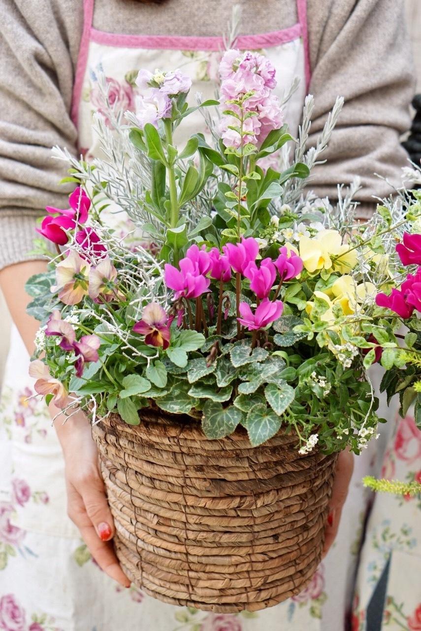 【はじめてのかごギャザリング体験レッスン】~花束みたいな新しい寄せ植え~プランツ・ギャザリングコース【大阪 八尾教室】