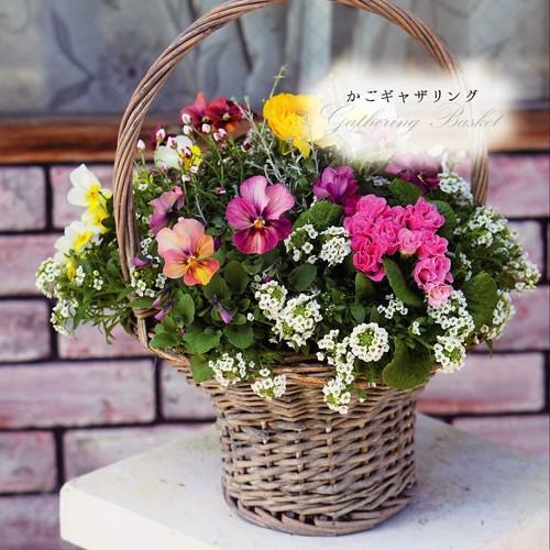 【かごギャザリング体験レッスン】~花束みたいな新しい寄せ植え~プランツ・ギャザリングコース【大阪 八尾教室】