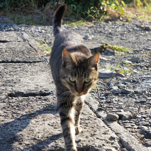 猫をメロメロにしちゃう撫で方講習会