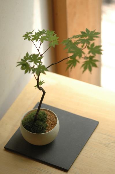 自分で作って楽しむ季節の景色盆栽 初級編