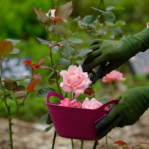 農薬をつかわない薔薇のそだてかた<初心者むき>