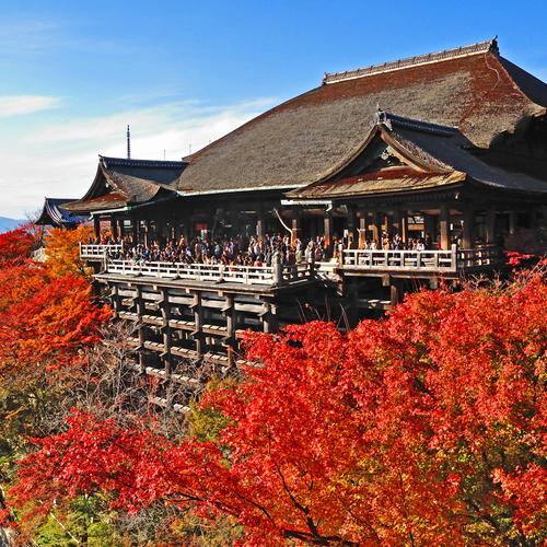 Fushimi Inari ,Tofukuji, Sanjusangendo, Kiyomizu Temple