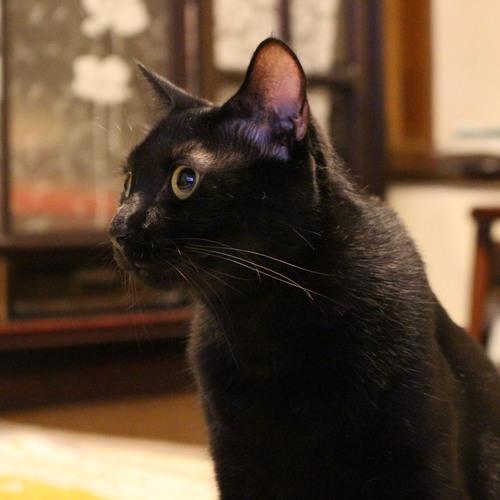 車椅子の方や老人介護施設等で暮らしている方が猫とふれあっていただきます (60 分)
