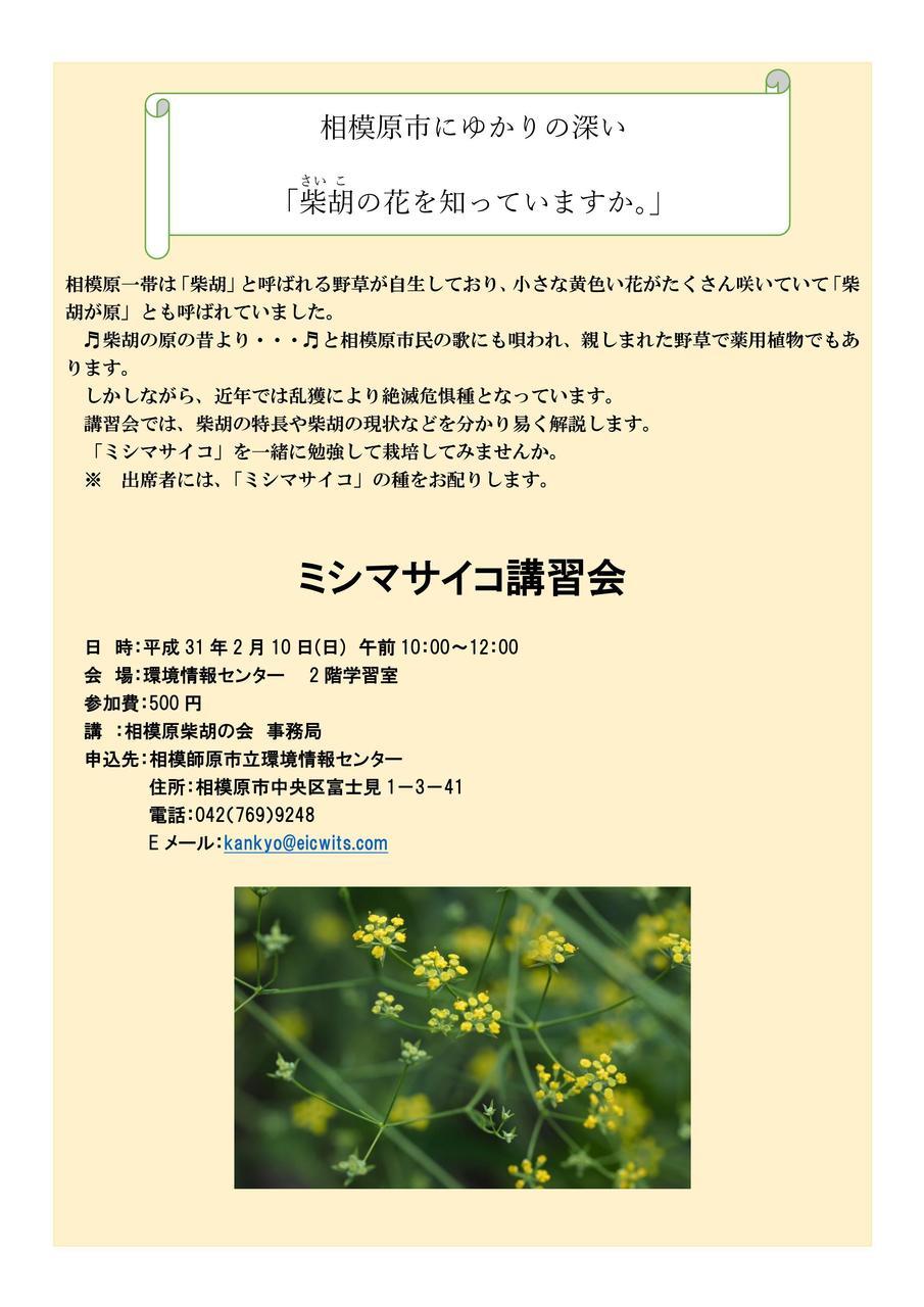 【ミシマサイコ講習会】~相模原市にゆかりの深い「柴胡の花を知っていますか。」~