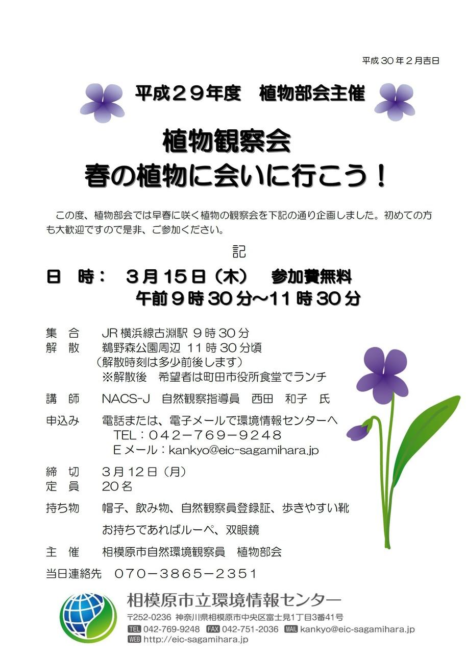 平成29年度 植物部会主催 植物観察会「春の植物に会いにいこう!」