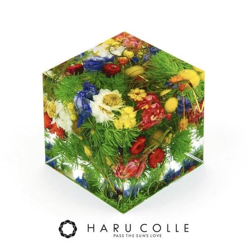 固めるハーバリウム!!HARU  COLLE 認定 クリスタル・アートリウム®