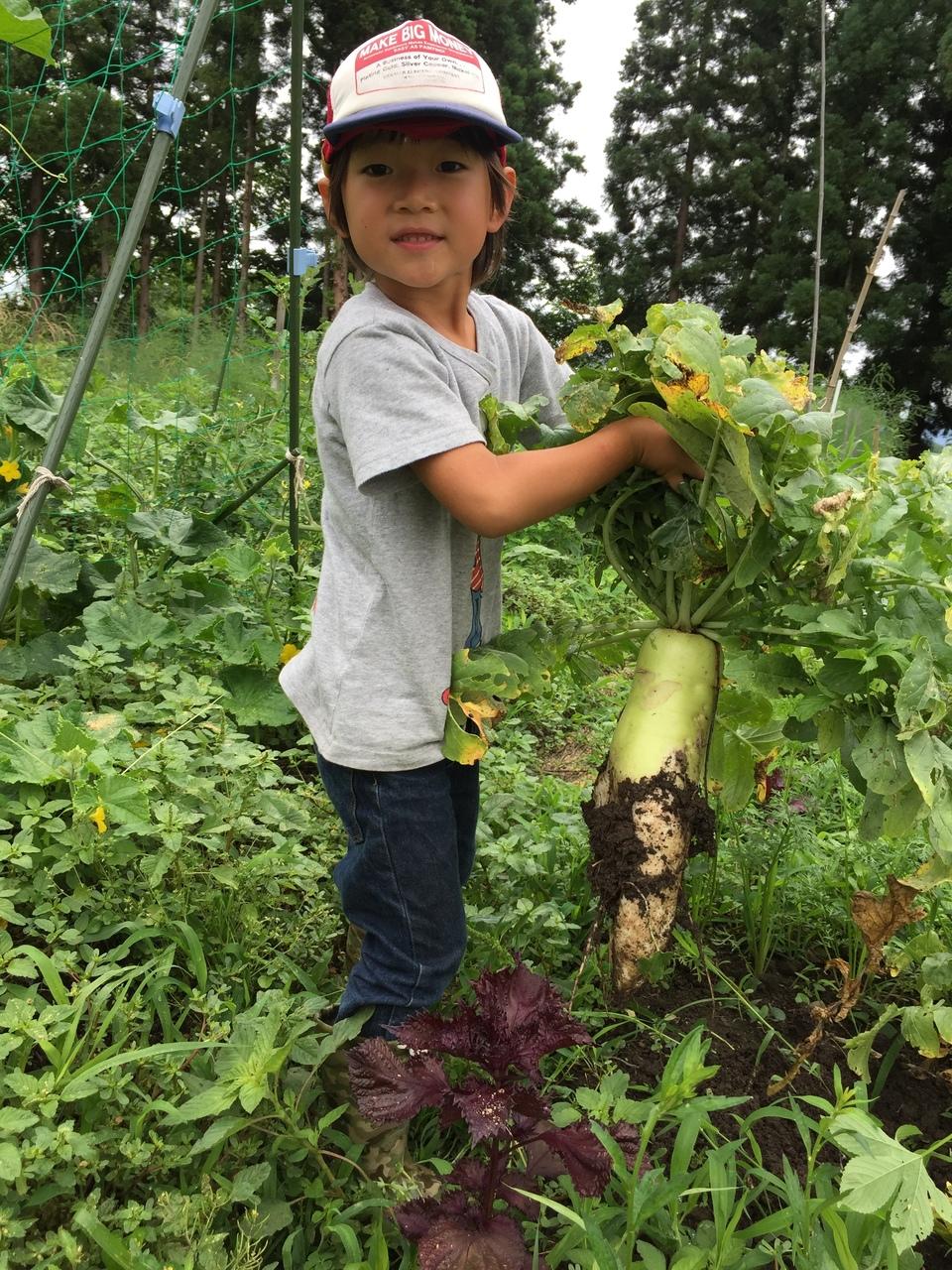 10月20日(土)  秋野菜作り&アケビ料理作りinよねざわ