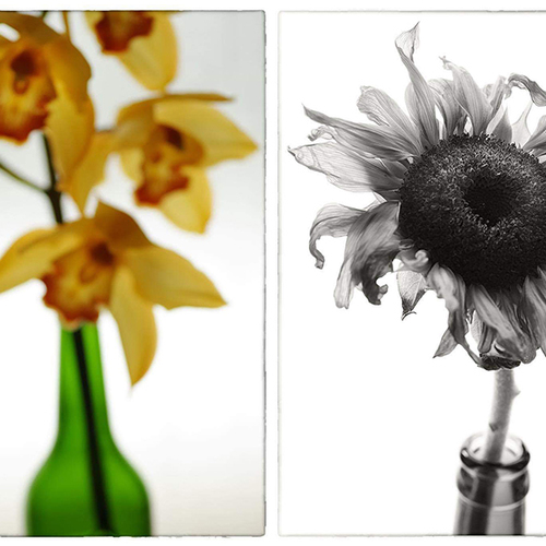 SIGMA Foveon 体験講座(Flower編) -SIGMA dp Quattroを参加者全員に貸し出します-
